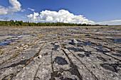 Alvar Landscape,Ontario