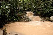 Muddy Stream in Rainforest