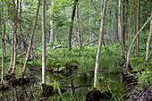 Wetland in New York