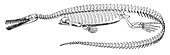 Mesosaurus brasiliensis,Extinct Reptile