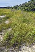 Dunne Vegetation