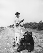 Roadside Entertainer with Black Bear
