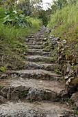 Mount Scenery Trail