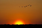 Florida Marsh at Sunset