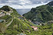 Lemon Groves,Amalfi Coast