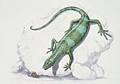Youngina hunting a snail,illustration