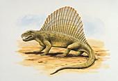 Profile of a cimetrodon,illustration