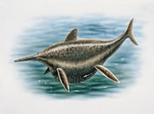 Shonisaurus in water,illustration