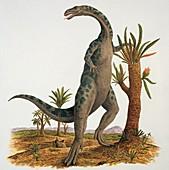 Yunnanosaurus near a tree,illustration