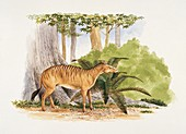 Side profile of a quagga,illustration