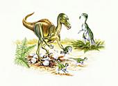 Illustration of Troodon
