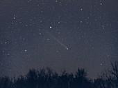 Comet Lovejoy,December 2013