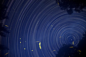 Fireflies and Sky Rotation