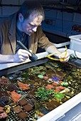 Fluorescent coral research