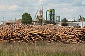 Logging industry,USA