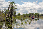Okefenokee National Wildlife Refuge,USA
