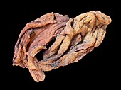 Ropy lava rock