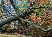 Hurricane Sandy aftermath,New Jersey,US
