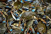 Atlantic blue crabs at a market