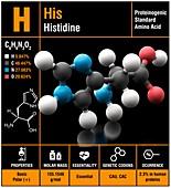 Histidine amino acid molecule
