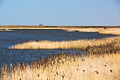 Titchwell,RSPB bird reserve,UK