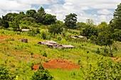 Farmstead,Zomba Plateau,Malawi