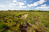 Lowland raised bog