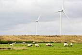 Yelvertoft wind farm,UK