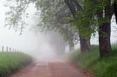 Hyatt Lane on a Foggy Morning