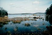 Jerseyfield Lake,Adirondack Park ,New York