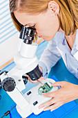 Technician using microscope
