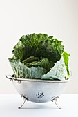 Cabbage leaves in a colander