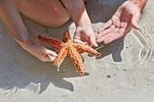 Child holding starfish on beach