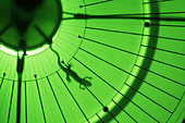 Newt in Magnetic Field