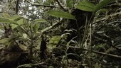 Forest epiphytes, Ecuador