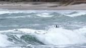 Pelican in waves, slow motion