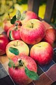 Frische Äpfel der Sorte Idared