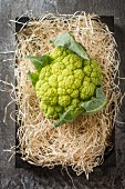 A green cauliflower on straw (seen from above)