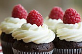Chocolate cupcakes decorated with fresh cream and raspberries