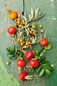 Rose hips and sea buckthorn berries