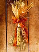 Corn cobs used as autumnal decorations on a wooden wall