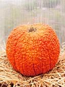 A large unusual pumpkin on straw