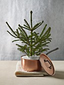 Small conifer tree planted in copper saucepan