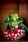 A bunch of French breakfast radish
