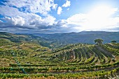 The Douro Valley and its vineyards in Portugal