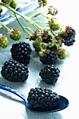 Fresh blackberries on a branch and a spoon