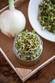 Homegrown sprouts in a glass jar