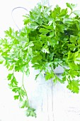 Fresh flat-leaf parsley