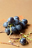 Black grapes on a an autumn leaf