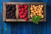 Wood box of colorful yellow and red raspberries and black dewberry with leaf